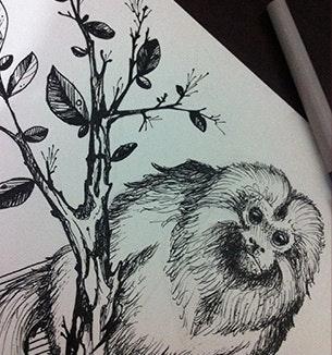 Tatuagem de um mico-leão
